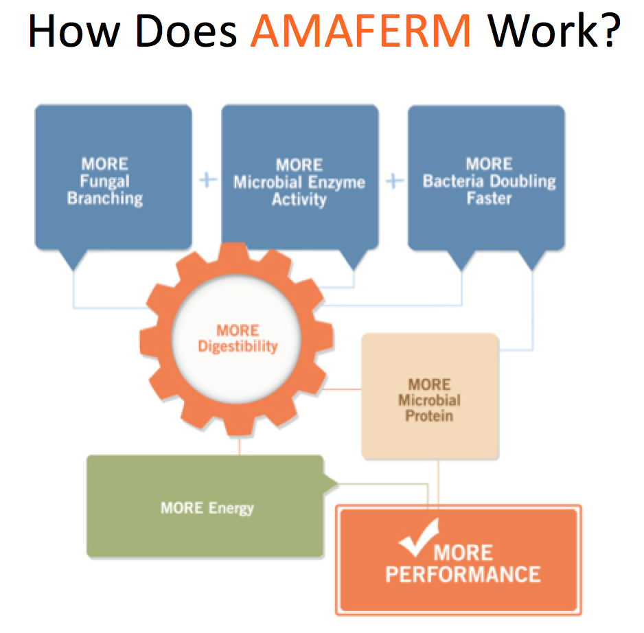 Forage Facts Issue 2 How Does Amaferm Work