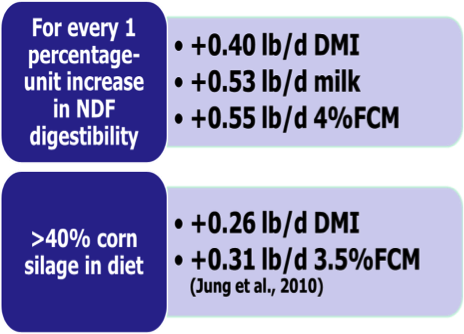 relationship between adf and ndf in dairy