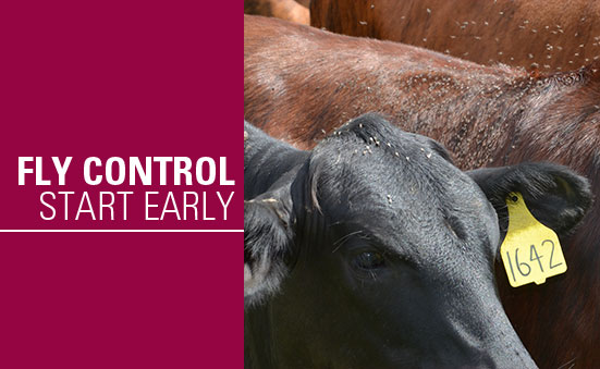 Fly Control – Start Early