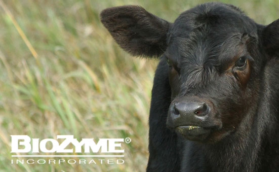 Health Protocols For Newborn Calves