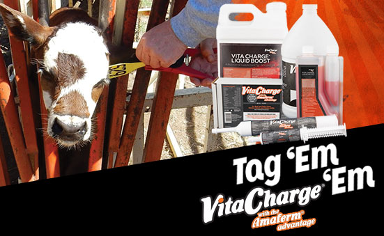 Product Focus: Vita Charge® and IGR Minerals