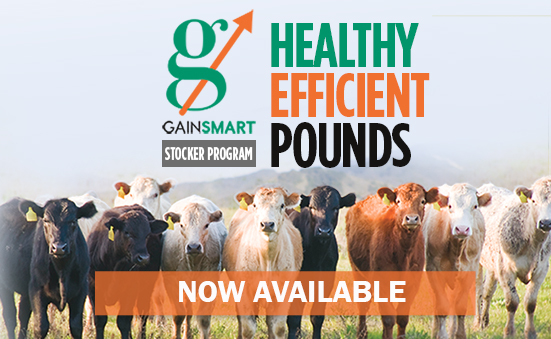 Introducing BioZyme's 3-Step Gain Smart Program: 3 steps to draw stockers/backgrounders to you
