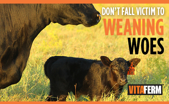 Don't Fall Victim to Weaning Woes