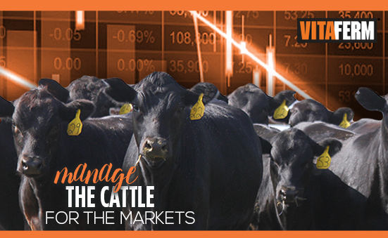 Manage the Cattle for the Markets