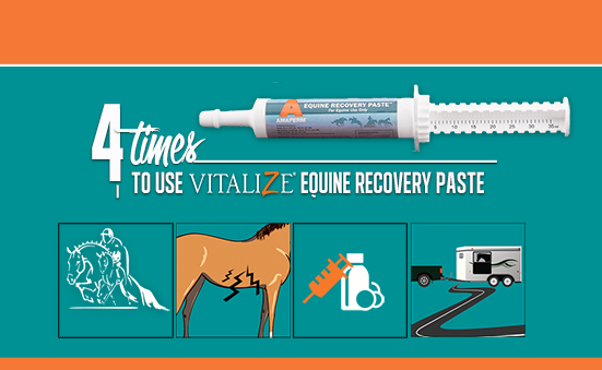 4 Times to Use Vitalize Equine Recovery Paste