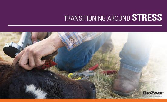Transitioning Around Stress