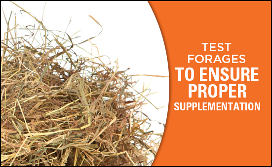 Test Forages to Ensure Proper Supplementation