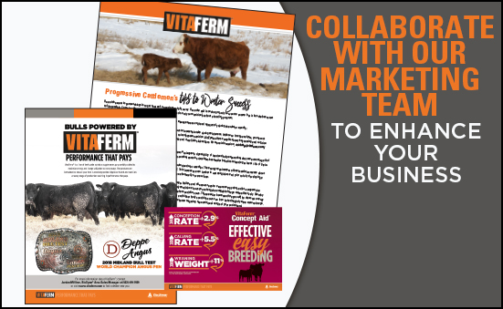 Collaborate with our Marketing Team to Enhance Your Business