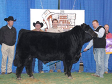 Colby Cummings, No Limit Cattle Co. | Arkansas