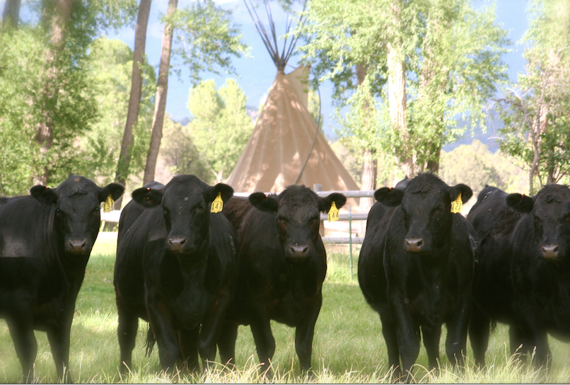 grass tetany awareness and prevention