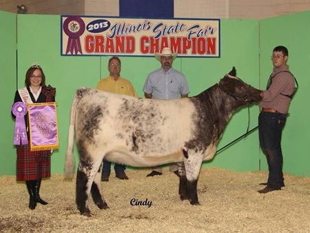 2013-il-statefair_champshorthornheifer_johnsonshorthorns