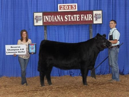 2013-instatefair_reschamp4-hlimoheifer_devancox