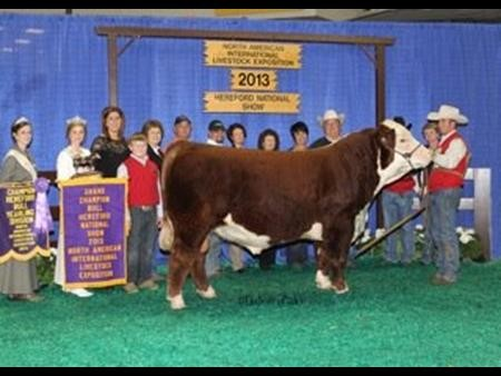 2013-naile_gc-herefordbull_annakrieger