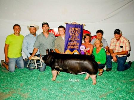 2013-ohstatefair_champberkshirebarrow_connorrayburn