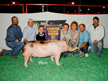 2013-wpe_gc-crossbredbarrow_guyer