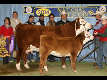 2014-nwss_gccowcalf_langfordherefords