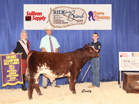 Grand Champion B&O Shorthorn Bull_Ryan Lane