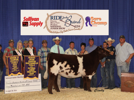 Reserve Grand Champion Shorthorn Plus Heifer_ Kane Aegerter