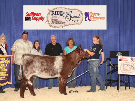 Division 1 Champion Shorthorn Heifer_Desirae Logsdon