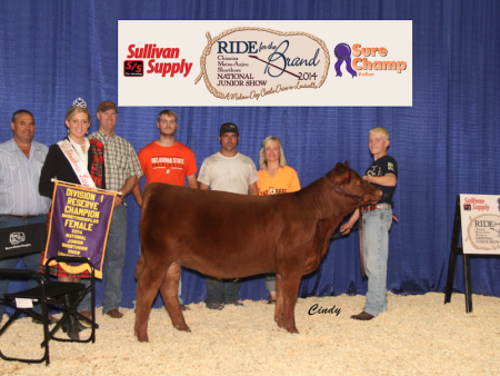Division 1 Reserve Champion Shorthorn Plus Heifer_ Wyatt Hancock