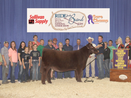 Grand Champion Shorthorn Female_Nick Sullivan
