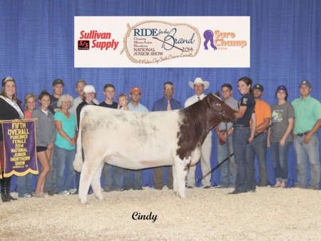 5th Overall Shorthorn Female_ Bailey Core