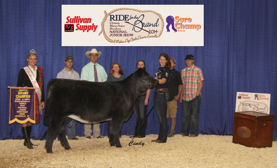 Reserve Grand Champion Bred & Owned Shorthorn Plus Heifer_Hannah Vickland