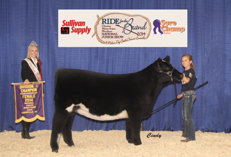Division 1 Champion Shorthorn Plus_ Madison McCormick