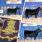 National Junior Maine Show