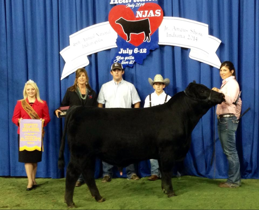 Perry Bull Calf Champ
