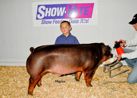 Champion Progress Duroc