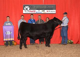 Mitchell Champion Bull
