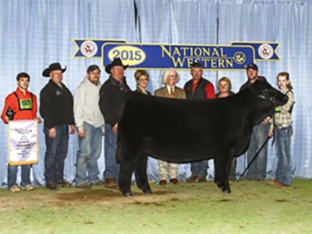 15-Reserve-Grand-Champion-Percentage-Simmental-Female