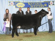 Champion-Senior-Yearling-NWSS-Female-Foundation-Simmental-Open-Show-
