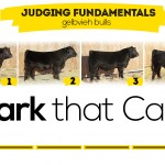 Option #2-Cattle Judging Class Featured Image