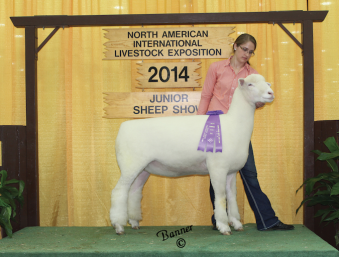 Champion Dorset NAILE