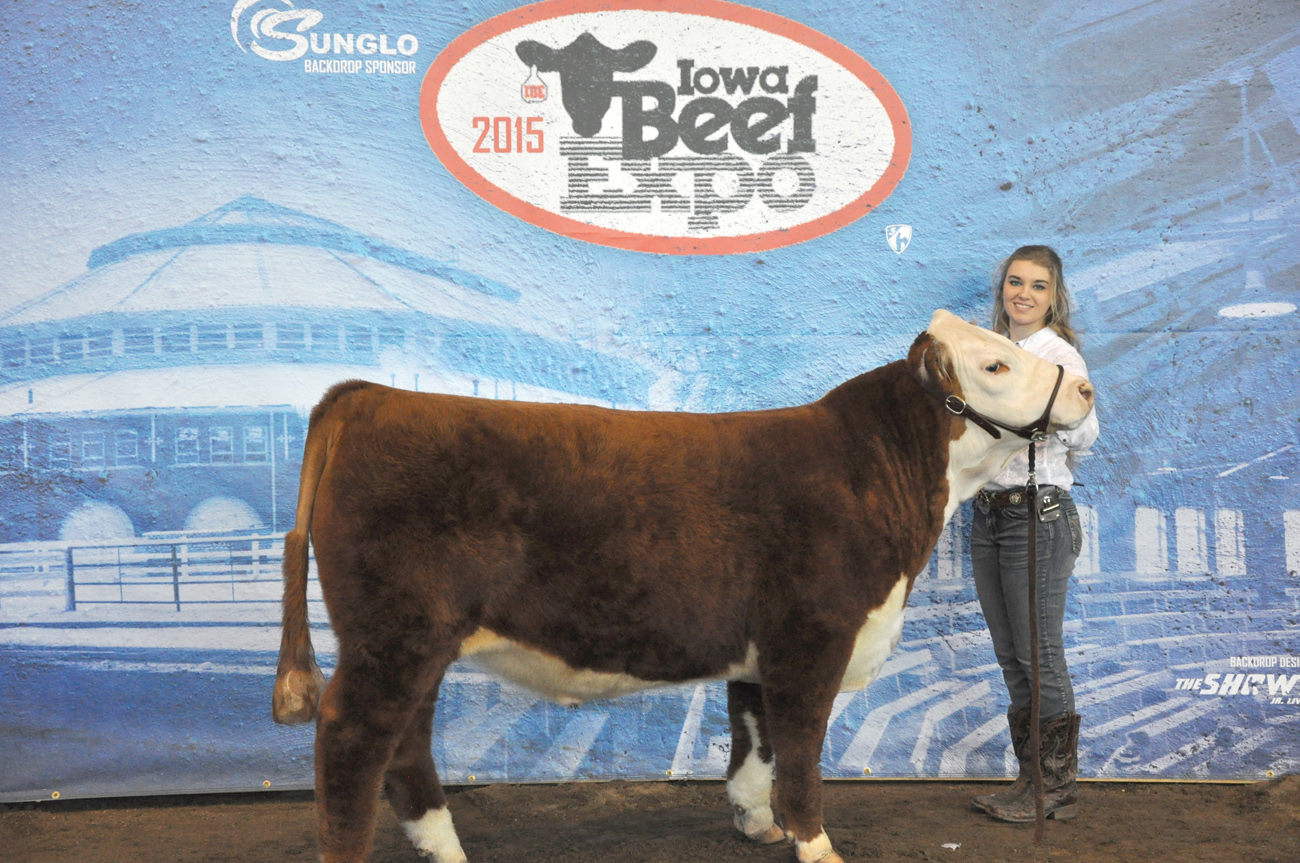 Reserve Champion Hereford Steer iowa Beef Expo