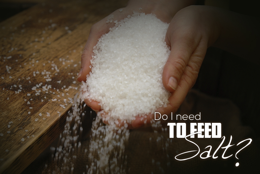 Do-I-Need-Feed-Salt-Featured