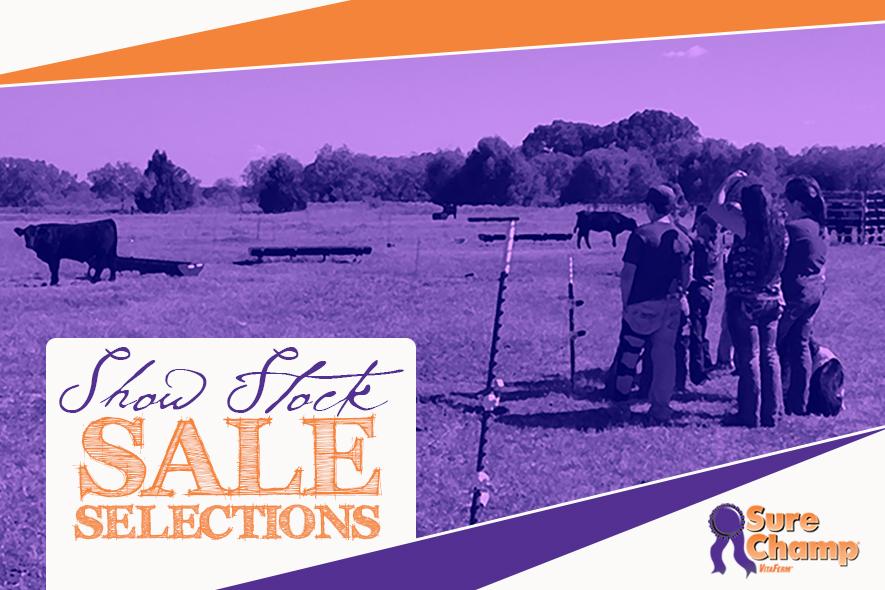 surechamp-saleselections-april2015-feature