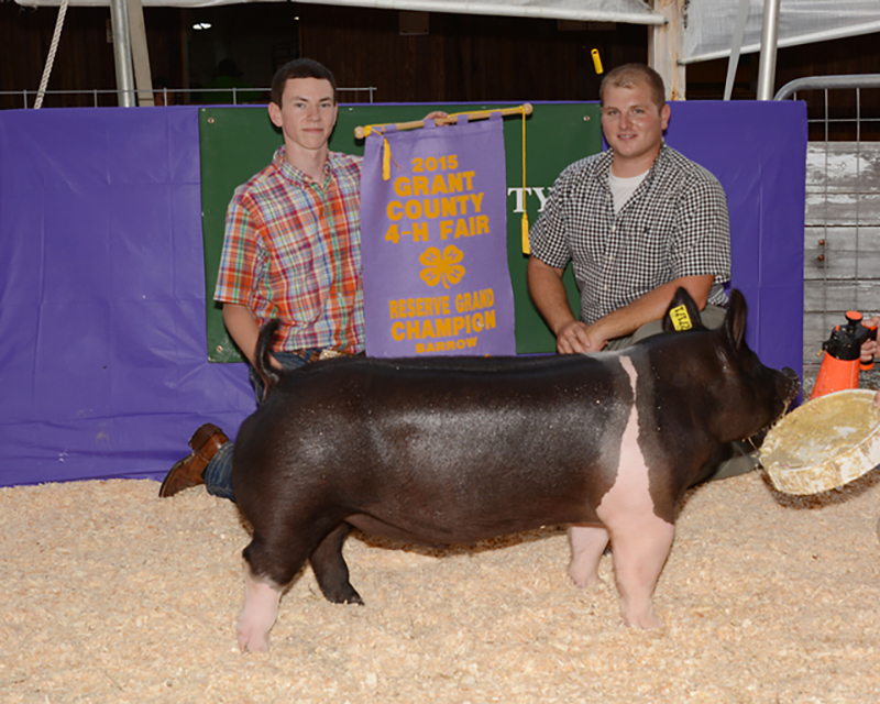 Clint Peacock Reserve Grand Champion Barrow Grand County 4-H Fair