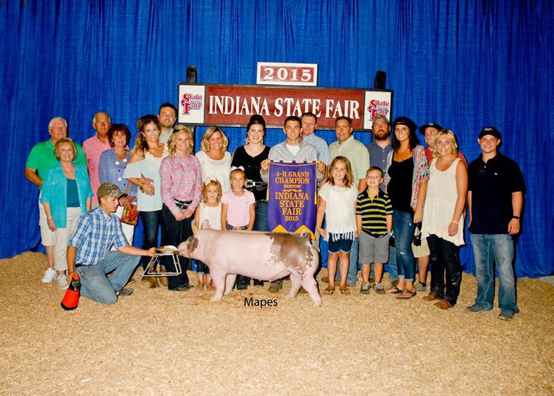 Brady Newhouse IN Grand Champion 4-H Barrow IN State Fair