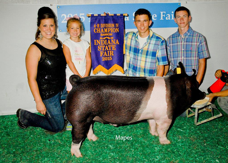 Brady Newhouse IN Grand Champion Barrow Div IV Indiana State Fair
