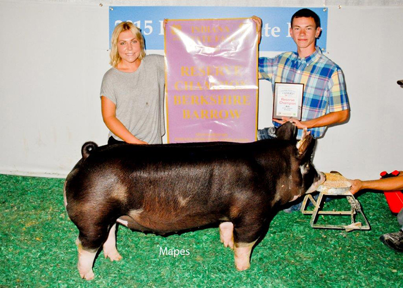 Reserve Champion Berkshire Barrow Clint Peacock IN