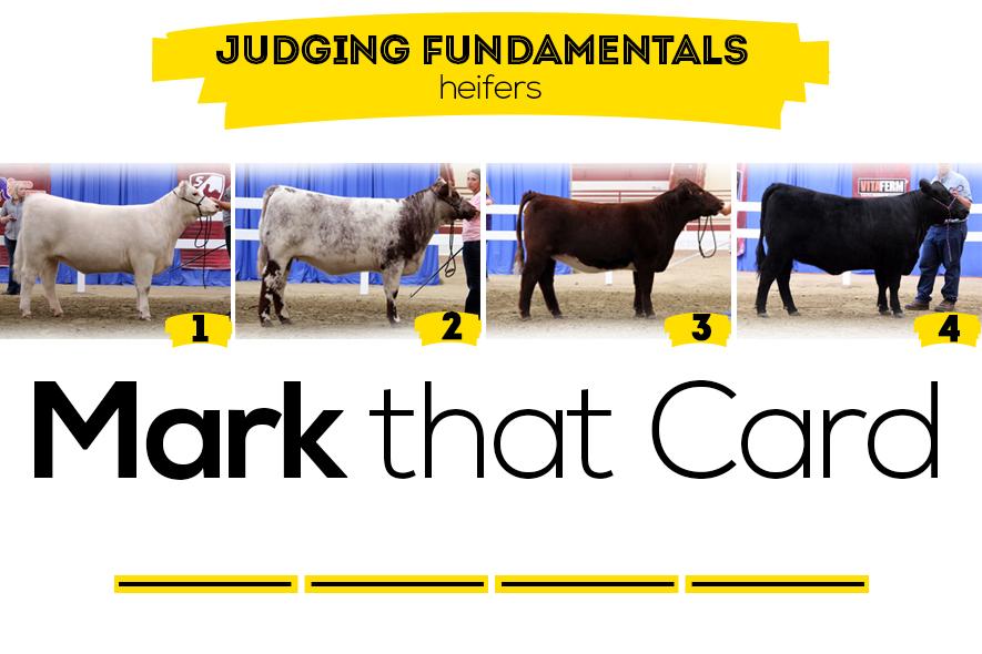 heifer judging class featured image