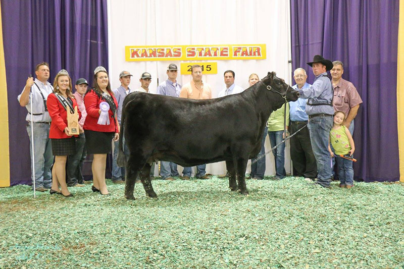 Reserve Champion Angus Female KS State Fair McCurry Angus Rancher