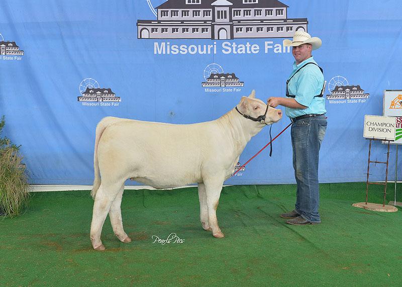 Calf Champion MO State Fair Ridder Farm MO.