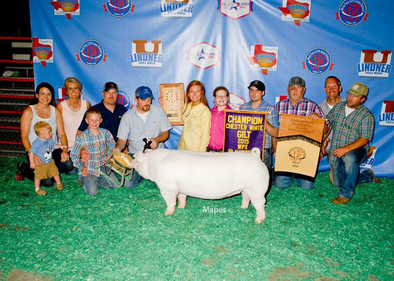 Grand CPS Gilt Overall & Champion Chester Olivia Caldwell IL