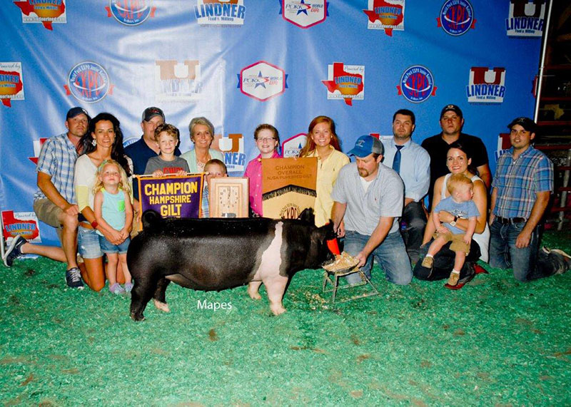 Grand NSR Gilt Overall & Champion Hampshire Olivia Caldwell IL WPX
