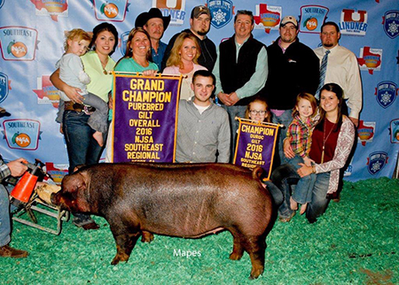 Clay Kincaid Indiana Grand Purebred Gilt Southeast Regional