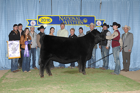 Mason Walker NWSS Reserve Grand Champion Limousin Open Show Female